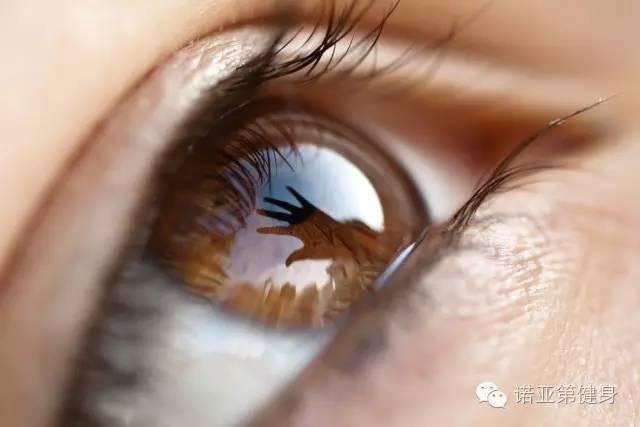 揭秘 眼睛的构造